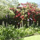 Gardens at Melville Guesthouse